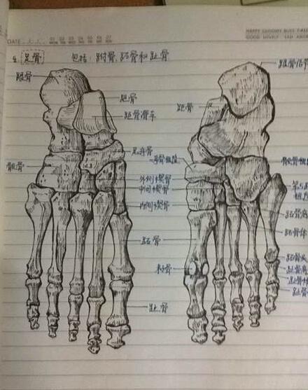 """军校学霸手绘骨骼图 医学系绘画系""""傻傻""""分不清"""