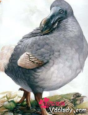 地球上灭绝的动物不计其数