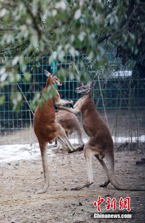 动物踢腿简笔画