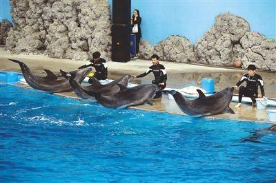 武夷山极地海洋公园经过3年多的建设,主体海洋馆已落成,海豚,海狮
