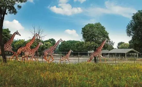 野生动物园将由三大主要功能区组成:野生