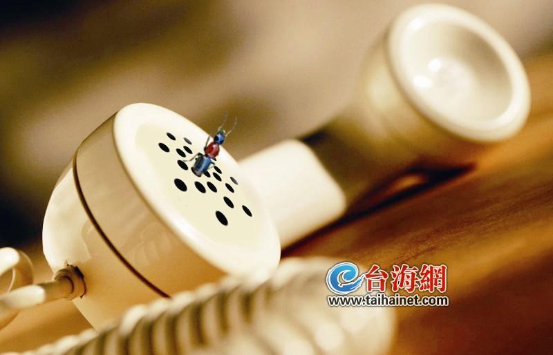 漳州:藏身电话筒 隐翅虫伤 3人