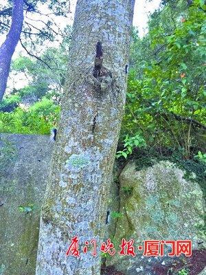 毛毛虫最近有点多 树下活动要小心