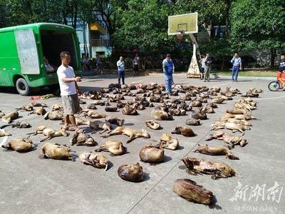 鹿等114只陆生野生动物
