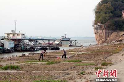鄱阳湖提前进入低水位 渔民弃船上岸湖边种菜 对生产生活用水影响较大