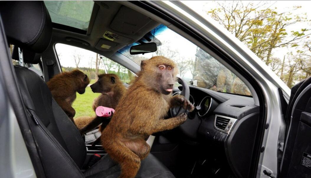 男子开车去动物园忘记反锁 回来提车时想死的心都有咋回事