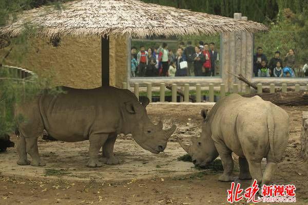 今天上午,北京动物园犀牛河马馆重装扩建后正式亮相 程功摄