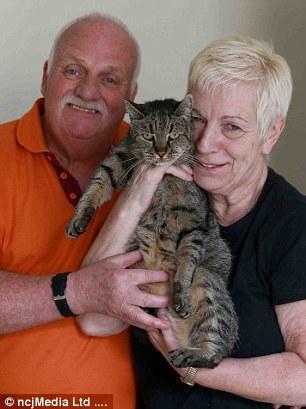 英国31岁的喵星人或成为全球最老的猫