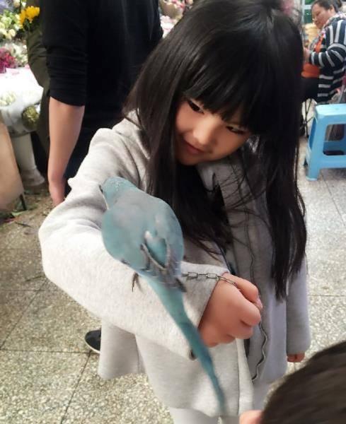 王诗龄瘦出瓜子脸变美了 与小鹦鹉玩耍萌翻 网友评论:太可爱了 捂心口