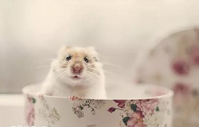 眼睛,昨天可被猫吓着了,今天整个pp是湿的,宝宝都是黑的,仓鼠也有点尾巴生了仓鼠多久可以摸图片
