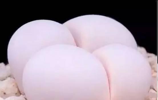 臀部形状图片图解