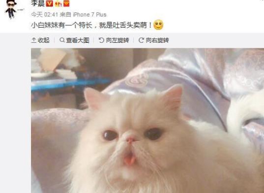 猫咪图片大全可爱吐舌