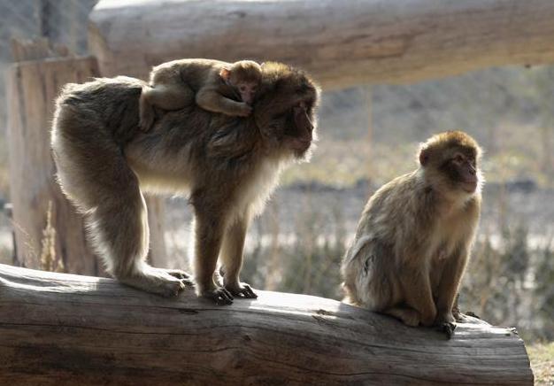 动物园的新动物 2015年这里遭遇洪灾上百只动物死亡
