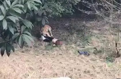 动物园所在地,宁波东钱湖旅游度假区管委会通过官方微博发布消息.