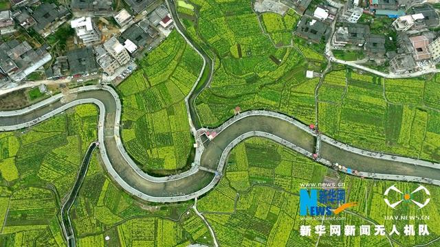 阳春三月,福建泉州洛区虹山村的油菜花如期盛开,吸引了不少游客前往