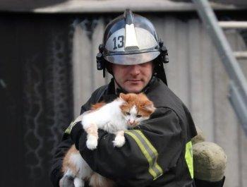 有爱!公寓楼天然气爆炸 消防员救出被困小猫