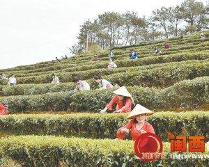 第三届采茶文化旅游节在桃溪举行