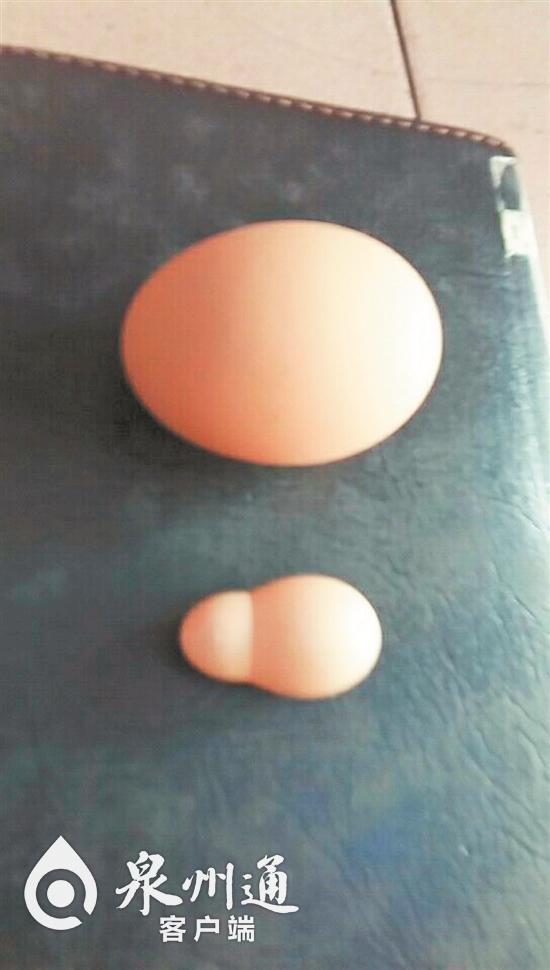 """你肯定没见过!泉州一任性母鸡产下""""葫芦蛋""""!"""
