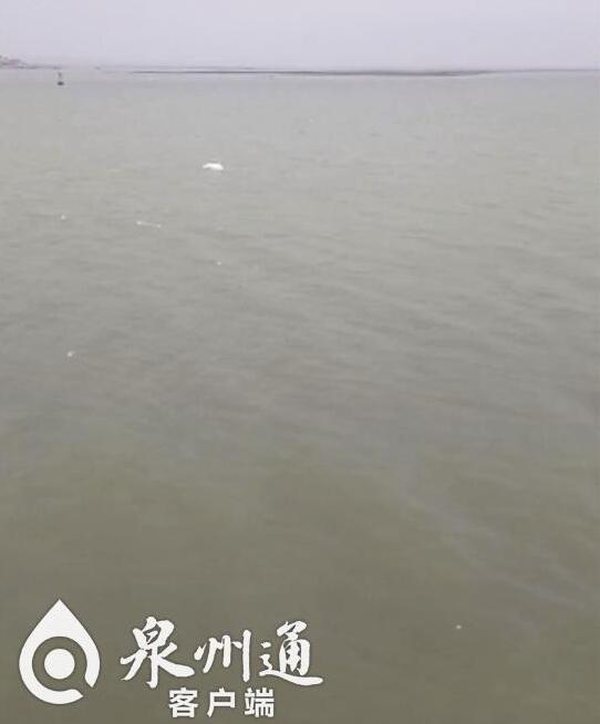 美极啦!一级保护动物白海豚现身泉州石井海面