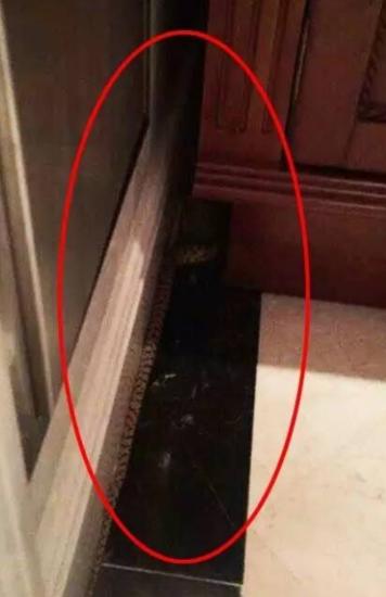 晋江一人家里惊现两米长的蛇 还在家里到处爬