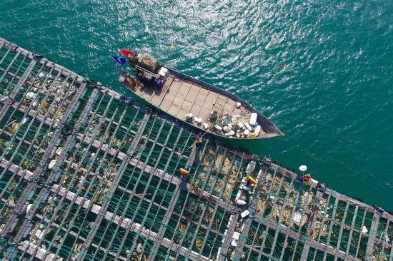 福建:清理海漂垃圾守护蔚蓝海洋(4)