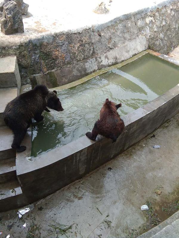 5日下午,在江苏常州淹城野生动物园老虎馆参观的游客看到了鲜见的一幕,一头活驴被几个人从一辆卡车上推进了饲养老虎的园区,几只老虎看到后立即扑了过去,不到半小时这头驴便被咬死。北青报记者6日上午联系常州淹城野生动物园管理部门的工作人员,他们表示,这是动物园一名股东有不满情绪做出的过激行为。   半小时驴子被咬死   据现场拍摄的视频显示,5日下午,.