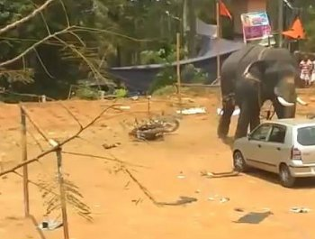 """印度大象失控""""暴走"""" 用鼻子掀翻小汽车"""