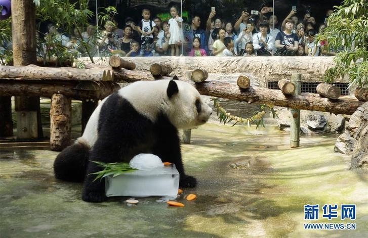 北京动物园:多种措施伴动物清凉过夏(组图)