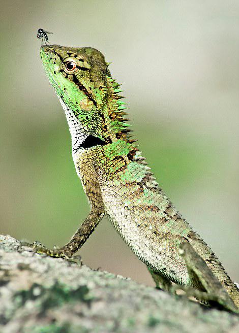 国际野生生物摄影大赛展多彩动物世界(8)