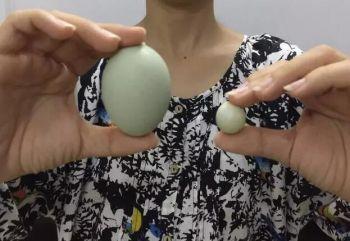 农户发现迷你鸡蛋 直径不足2厘米仅重4克