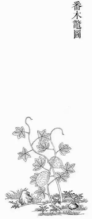 手绘环艺植物反射