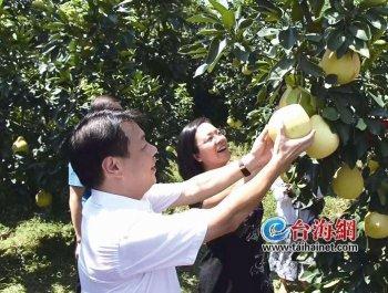 第十三届平和蜜柚节9月27日开幕