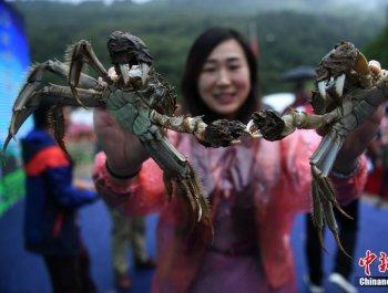 蟹农庆开捕 蒸千只大闸蟹免费宴请民众