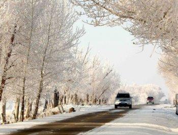 新疆阿勒泰现雾凇美景宛若仙境
