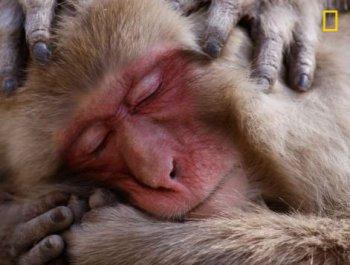 《国家地理》年度自然摄影大赛 猩猩肖像夺魁