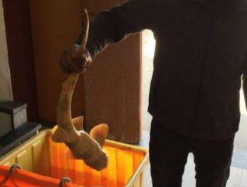 """泉州渔民钓到罕见""""怪鱼"""""""