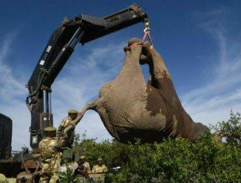 """这""""快递""""有点重 肯尼亚运送大象"""