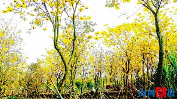 春天的美景 绿树红花