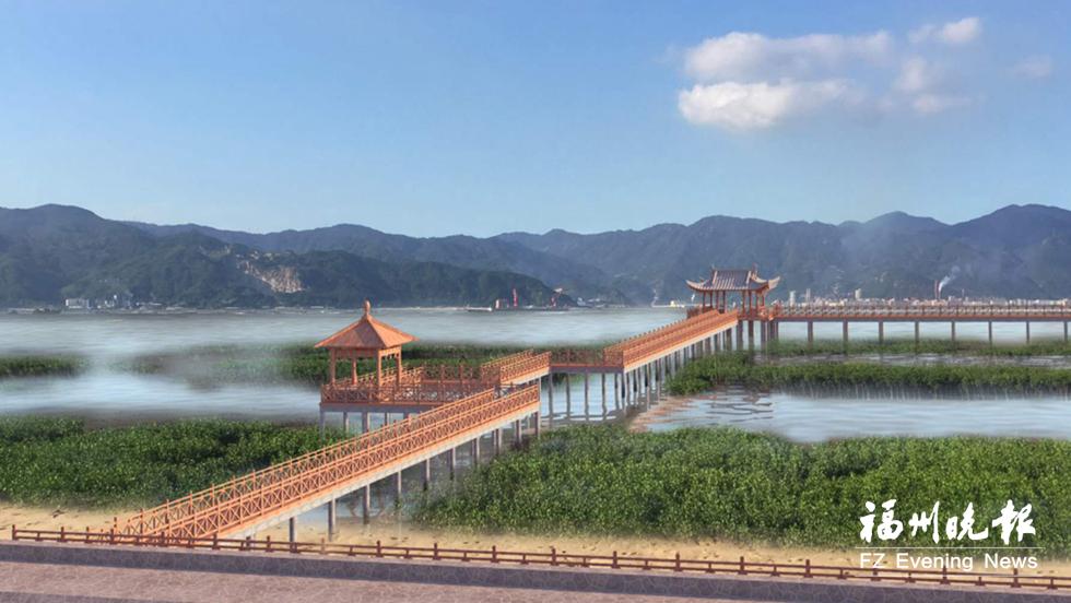 罗源湾建红树林海岸公园 栈道入海穿行海上森林