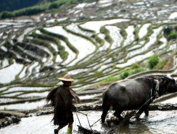 """尤溪联合梯田获颁""""全球重要农业文化遗产""""证书"""
