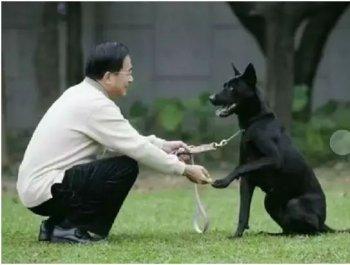 到处乱咬 一条狗要当台湾老大