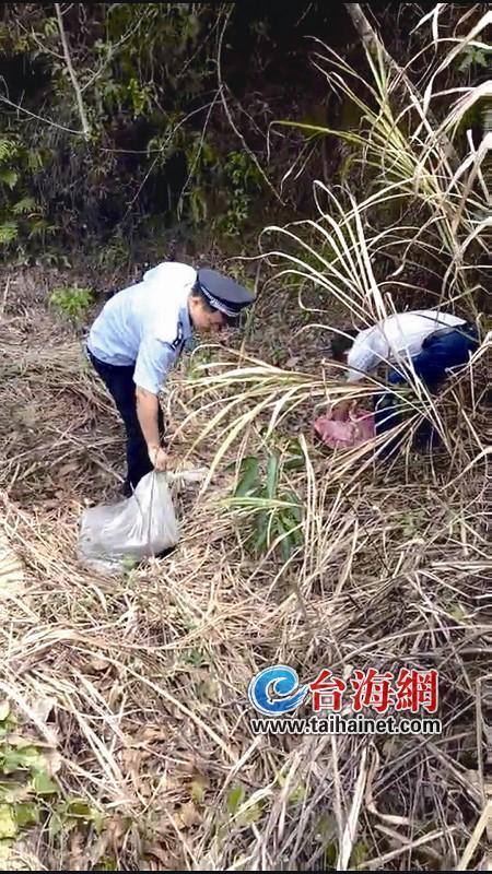 龙岩:大蟒蛇进村造窝孵蛋 33斤重约4米长