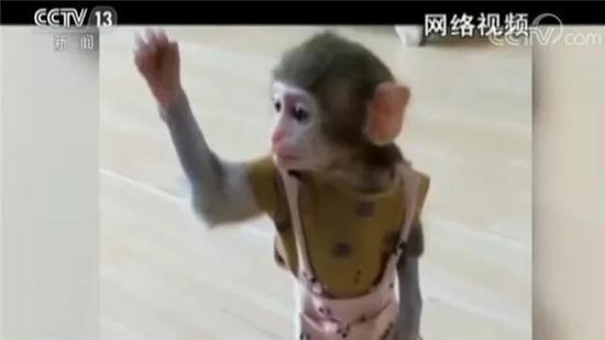 网红直播养猴牵出大案:5人被抓 20只猕猴死亡(2)
