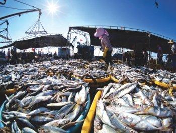 石狮:开渔归来新鲜渔货上市
