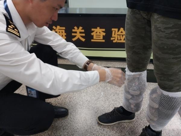 旅客腿上绑214只蜜袋鼯入境被厦门海关看破