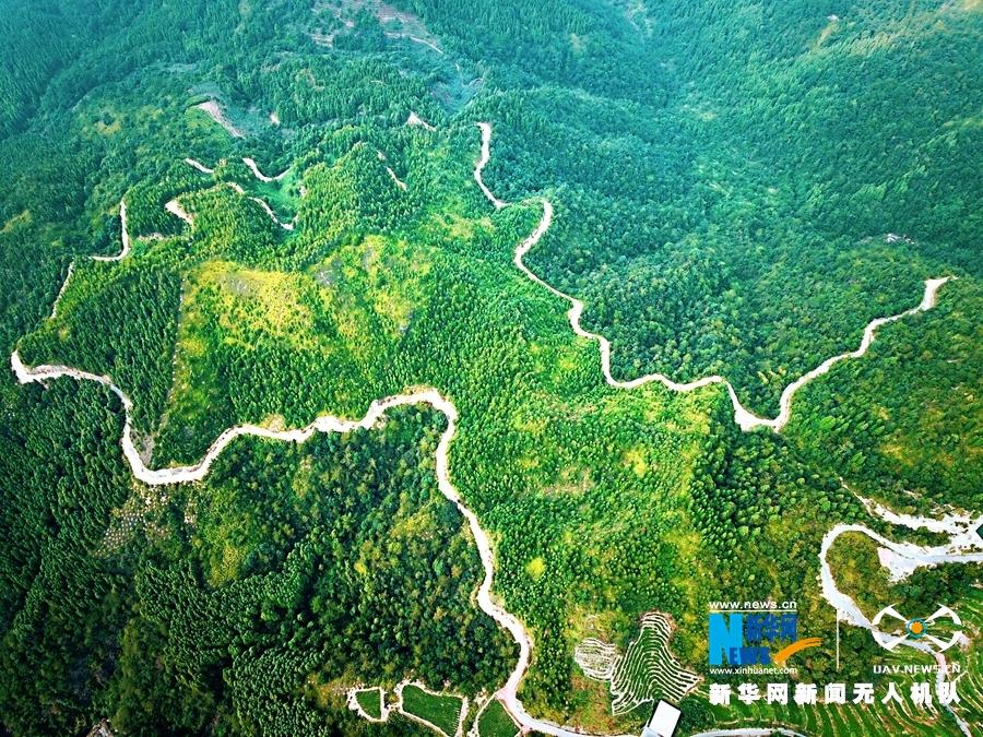 10月9日,记者驱车来到安溪县虎邱镇,穿行于绵延不断的山路之上,不时