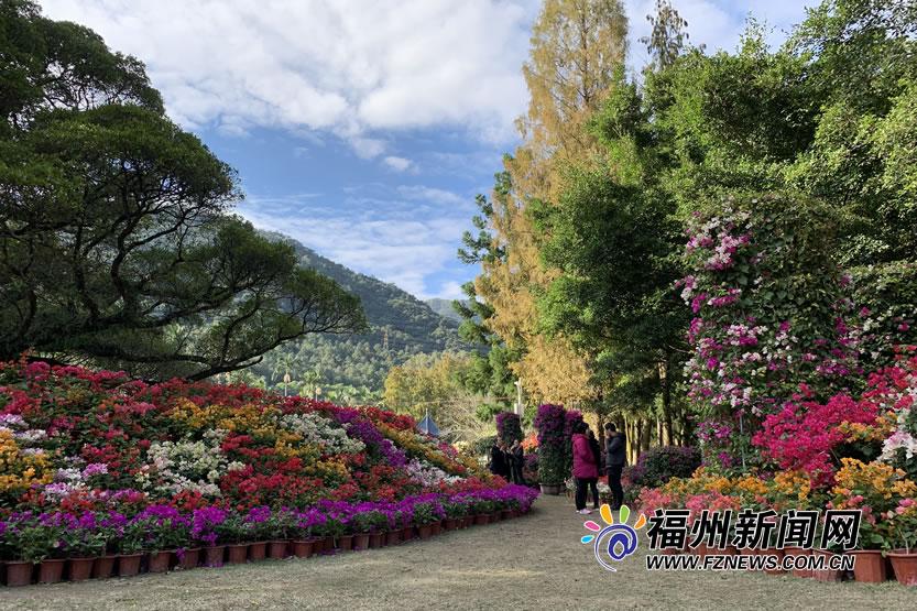 """福州国家森林公园:七彩三角梅映衬""""福州蓝""""(11)"""