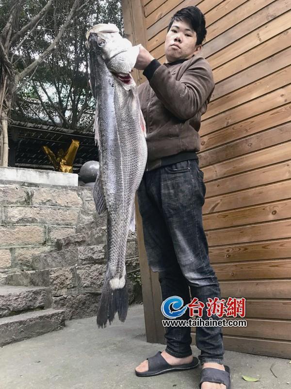 罕见!漳州一渔民捕获一条27斤重野生鲈鱼