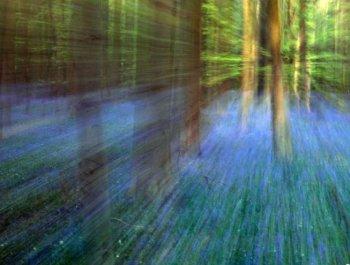 林间风信子盛开 令人之身童话世界