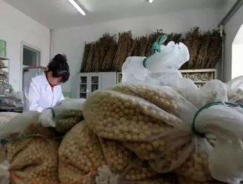 中国大豆,底气在哪里?